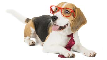 dog-training-redditch