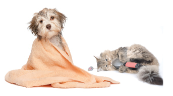 grooming-parlour-redditch