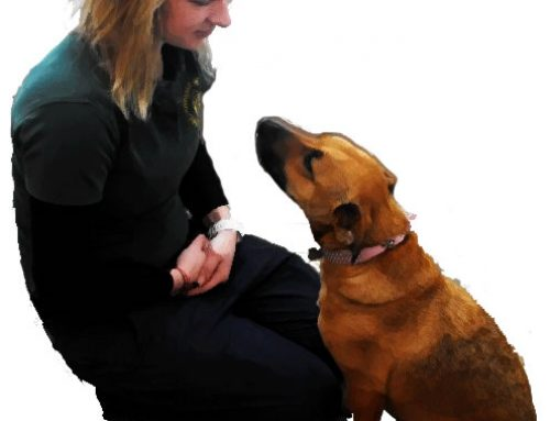 Effective Dog Training to Prevent Biting