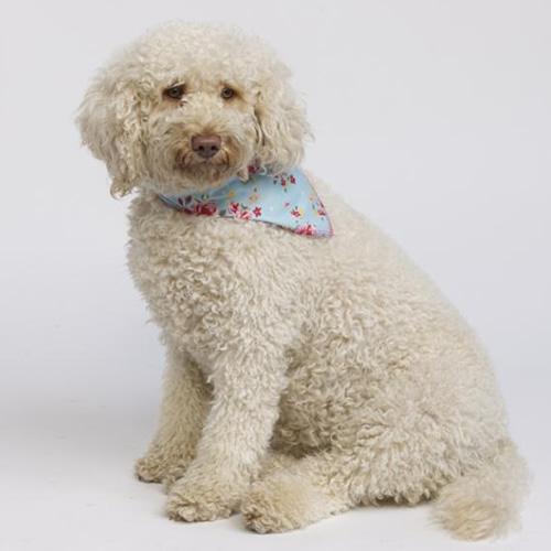 handmade dog bandanas