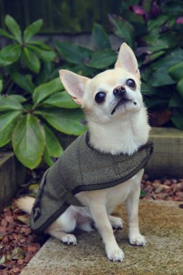 Country and Twee Dog Coat
