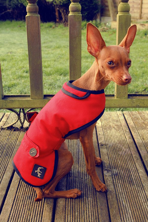 Red Wax Country and Twee Dog Coat
