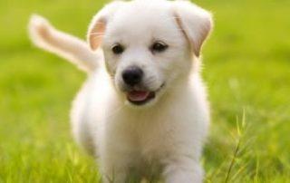 Puppy Training Birmingham