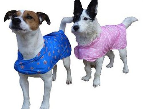 Get Ready for Autumn with our Packable Dog Rain Coat