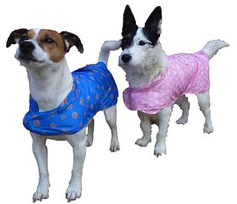 Packable Rain Dog Coat