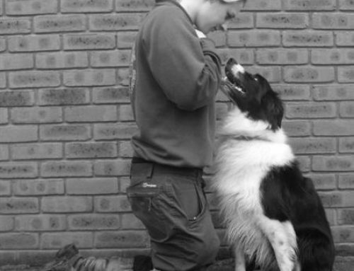 The Complete Dog Training and Agility Centre
