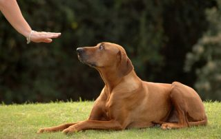 dog training redditch